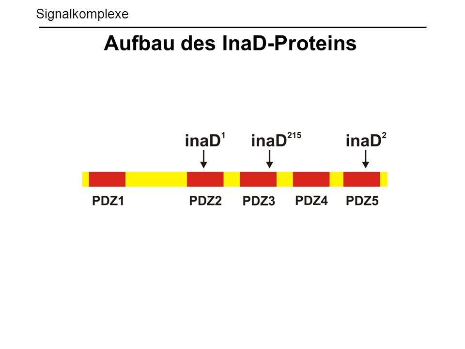 Aufbau des InaD-Proteins