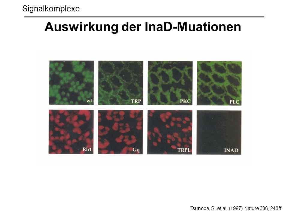 Auswirkung der InaD-Muationen