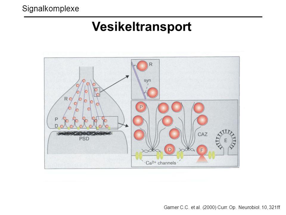 Vesikeltransport Signalkomplexe