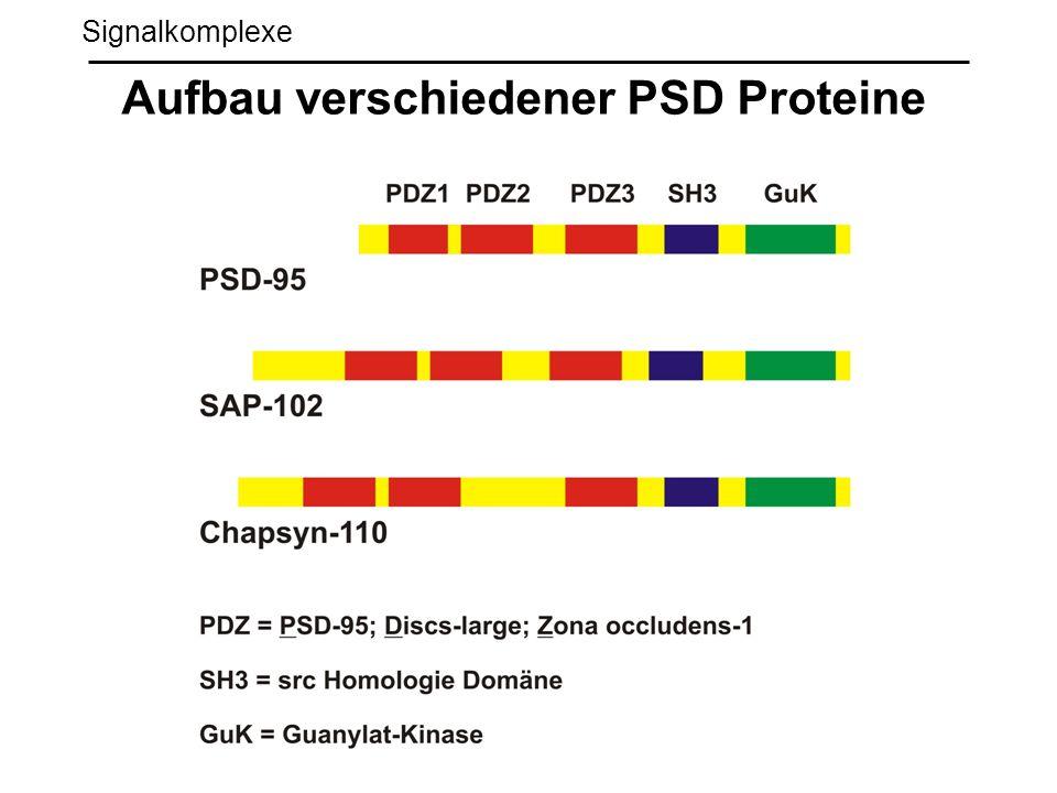 Aufbau verschiedener PSD Proteine