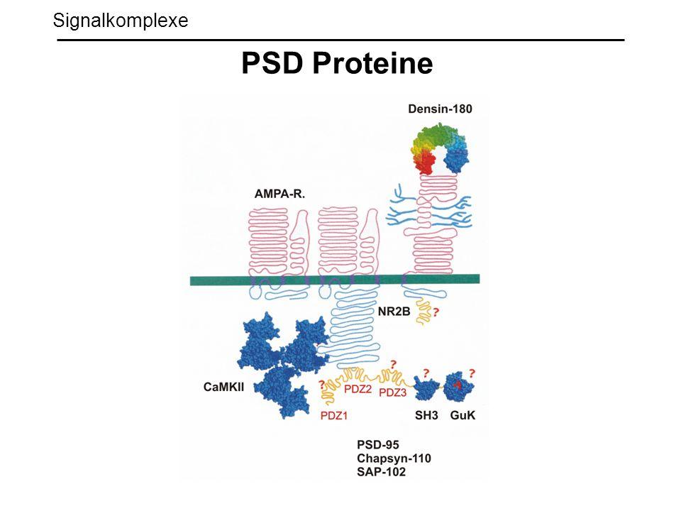 Signalkomplexe PSD Proteine