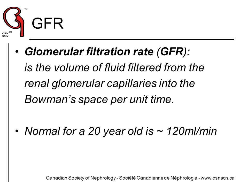 GFR Glomerular filtration rate (GFR):