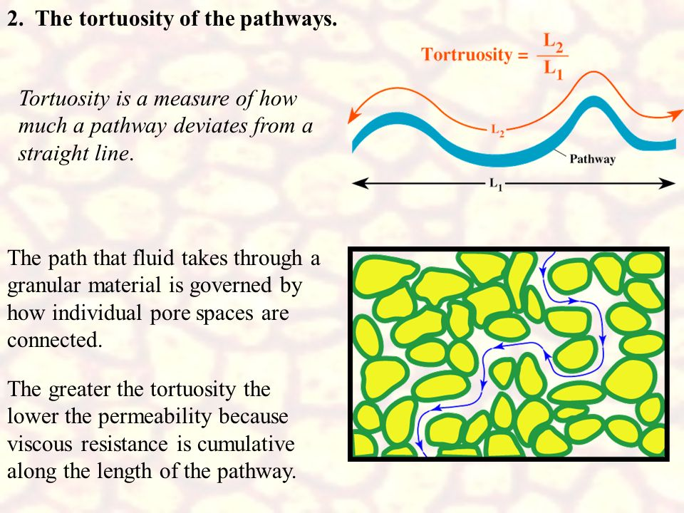 2. The tortuosity of the pathways.