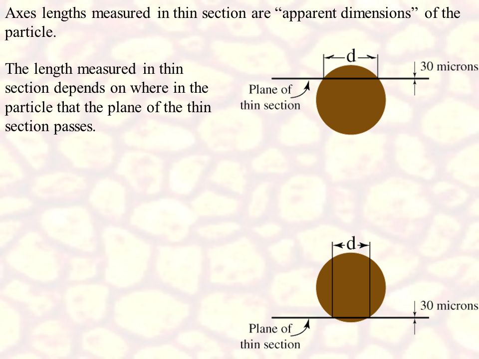 Axes lengths measured in thin section are apparent dimensions of the particle.