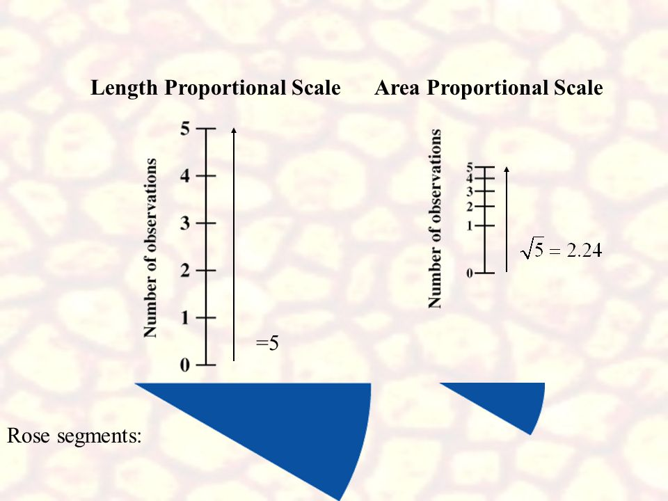 Length Proportional Scale