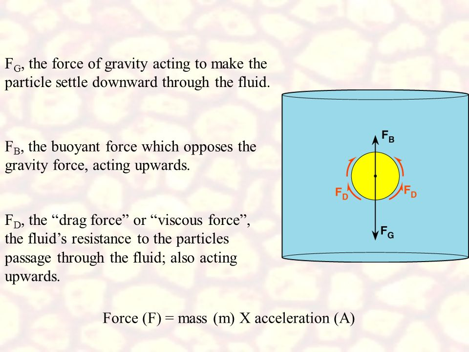 FG, the force of gravity acting to make the particle settle downward through the fluid.