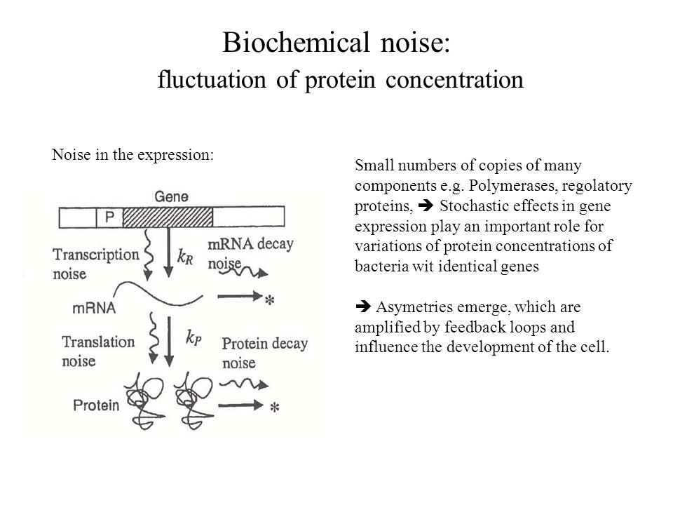 Biochemical noise: fluctuation of protein concentration