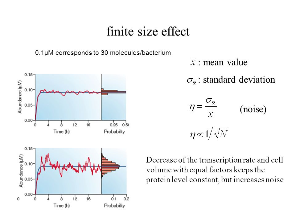 finite size effect : mean value : standard deviation (noise)