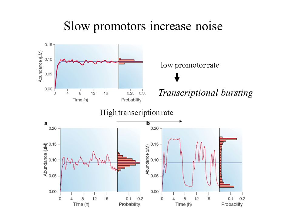 Slow promotors increase noise