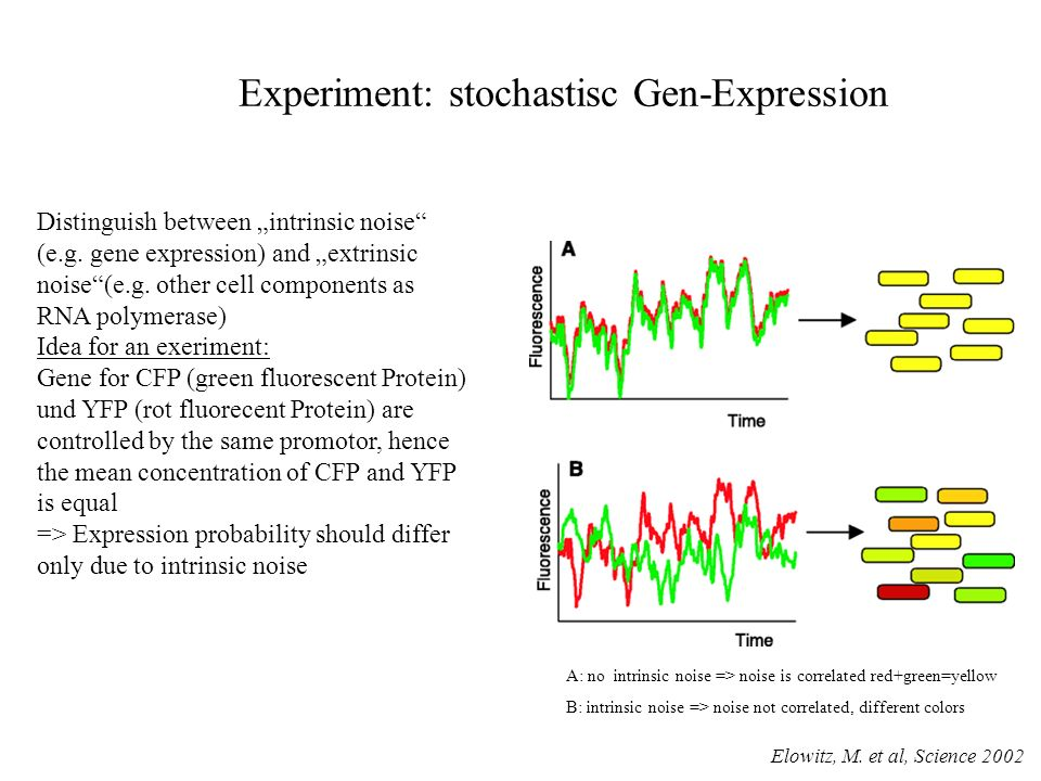 Experiment: stochastisc Gen-Expression