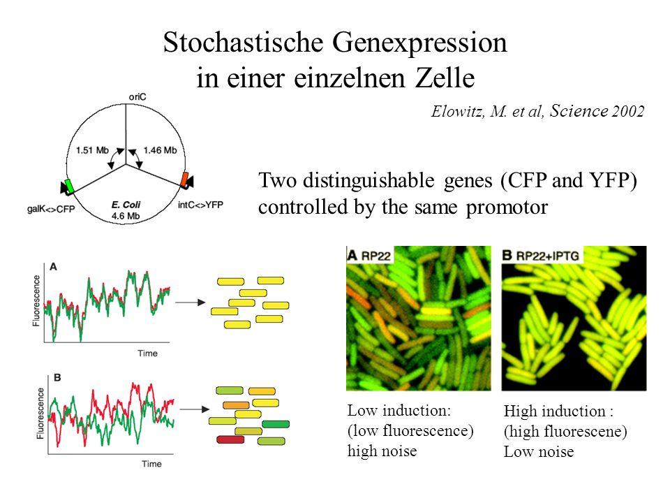 Stochastische Genexpression in einer einzelnen Zelle