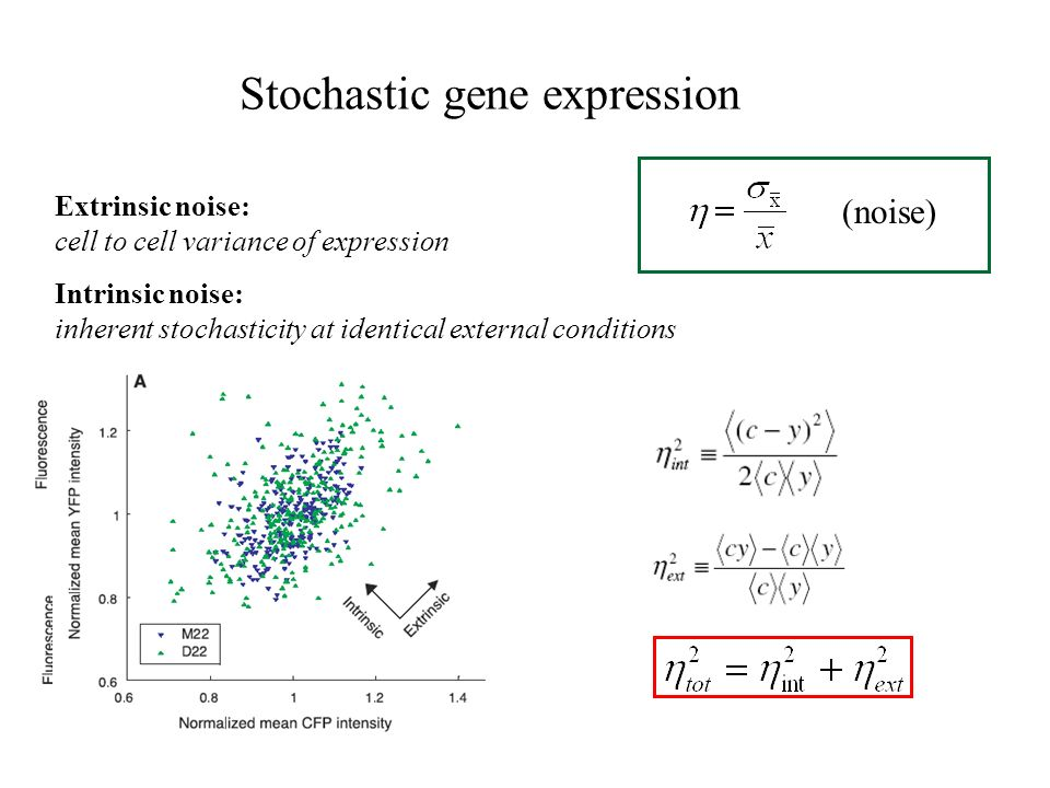 Stochastic gene expression