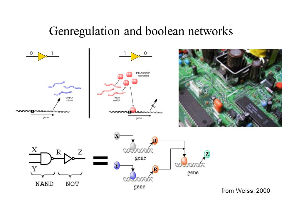 Genregulation and boolean networks