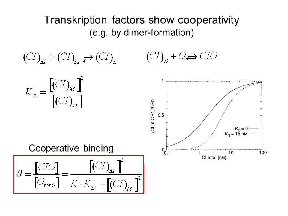 Transkription factors show cooperativity (e.g. by dimer-formation)