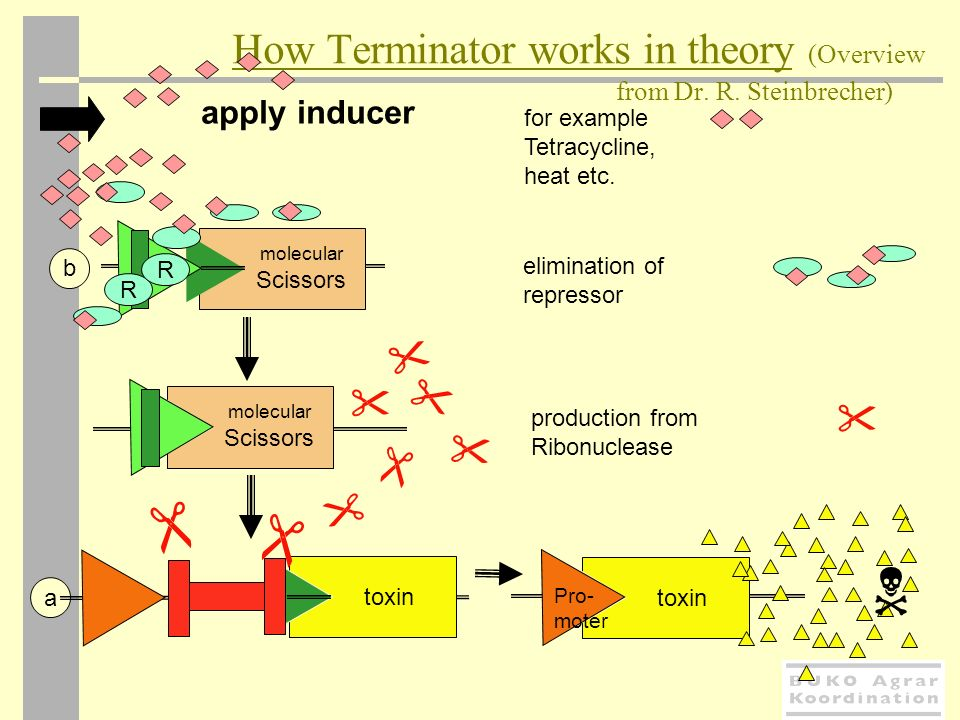 How Terminator works in theory (Overview from Dr. R. Steinbrecher)