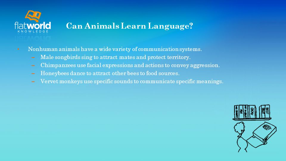 Can Animals Learn Language