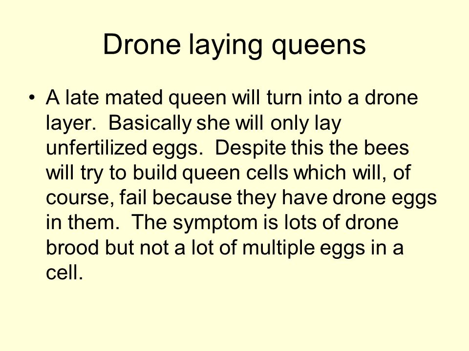Drone laying queens