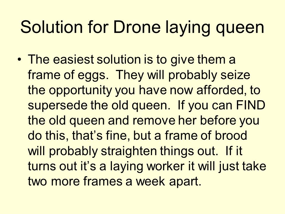 Solution for Drone laying queen
