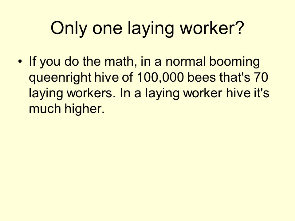 Only one laying worker