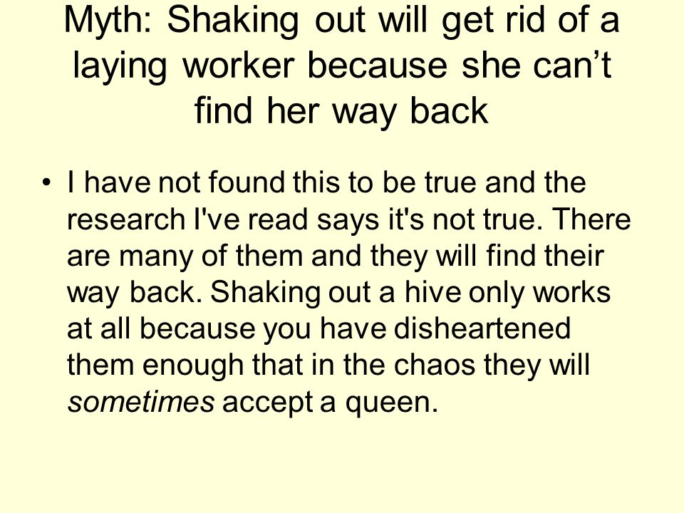 Myth: Shaking out will get rid of a laying worker because she can't find her way back