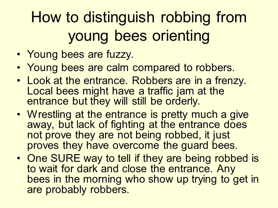 How to distinguish robbing from young bees orienting