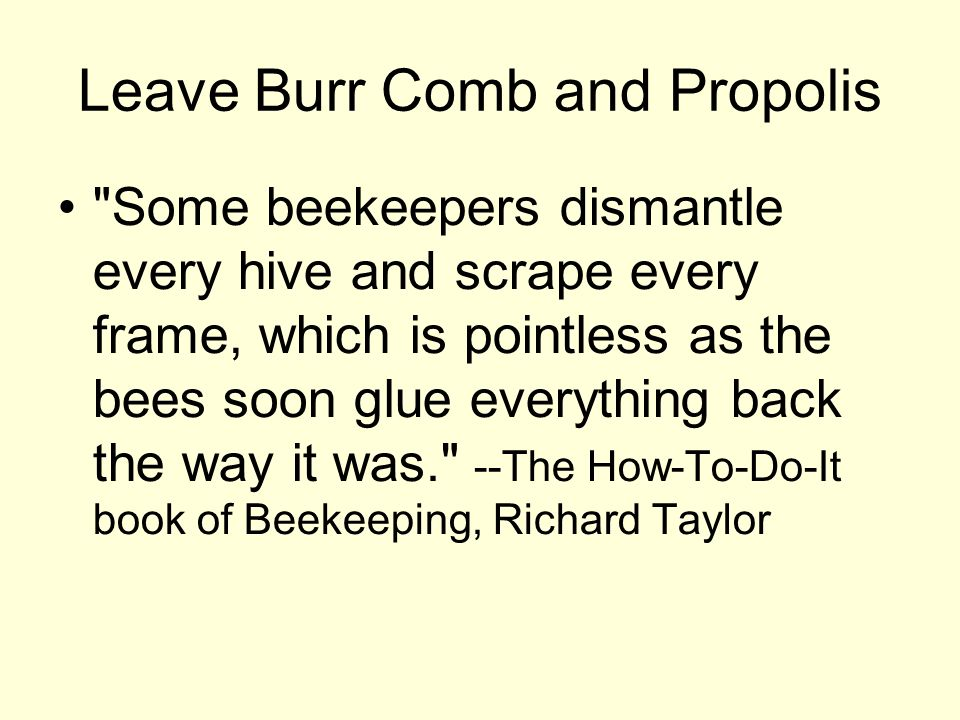Leave Burr Comb and Propolis