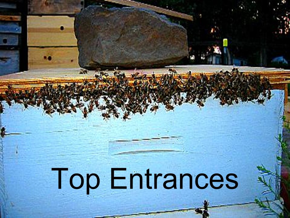 Top Entrances