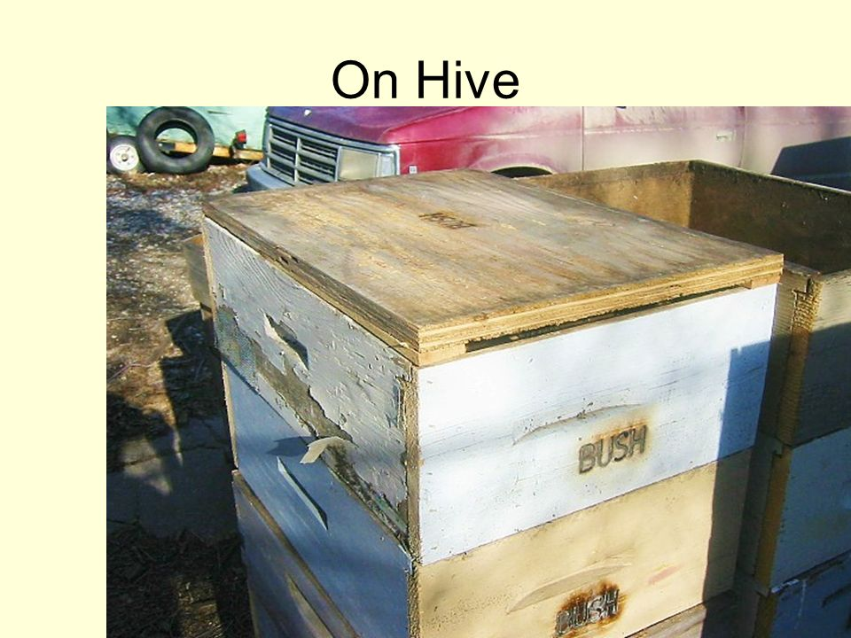 On Hive