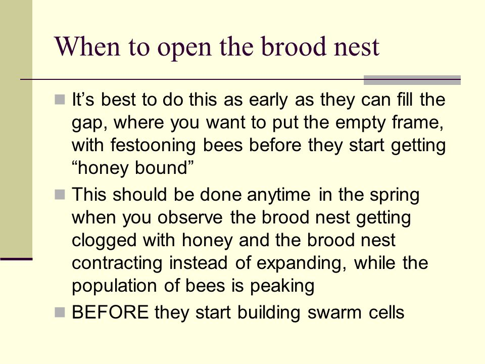 When to open the brood nest