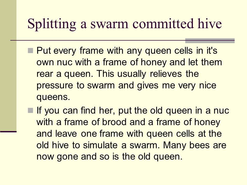 Splitting a swarm committed hive