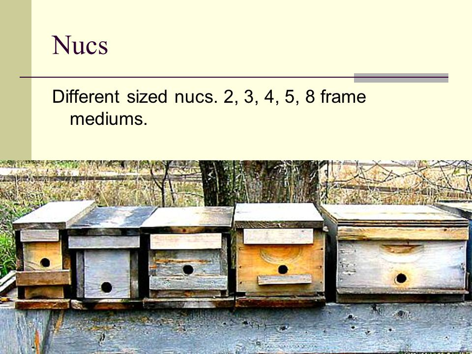 Nucs Different sized nucs. 2, 3, 4, 5, 8 frame mediums.