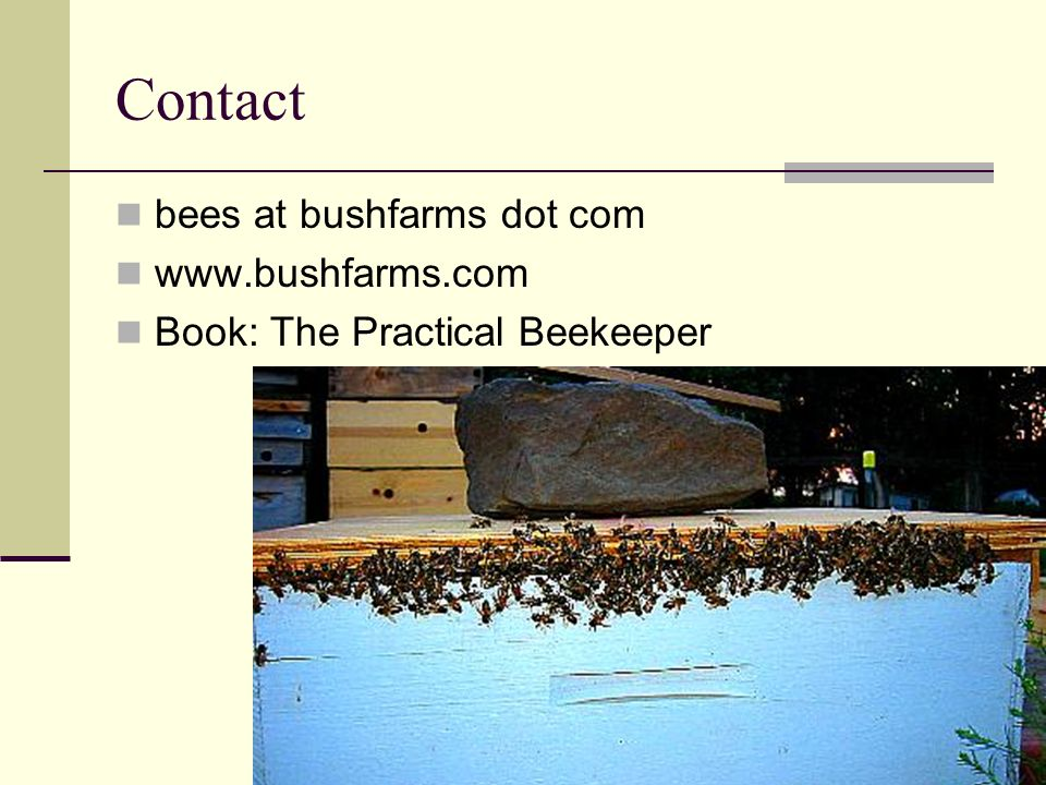 Contact bees at bushfarms dot com