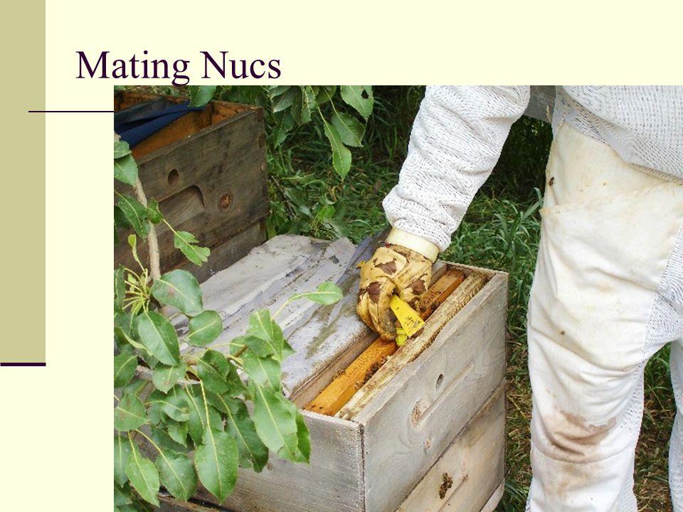 Mating Nucs