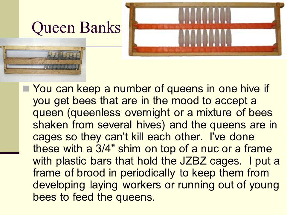 Queen Banks