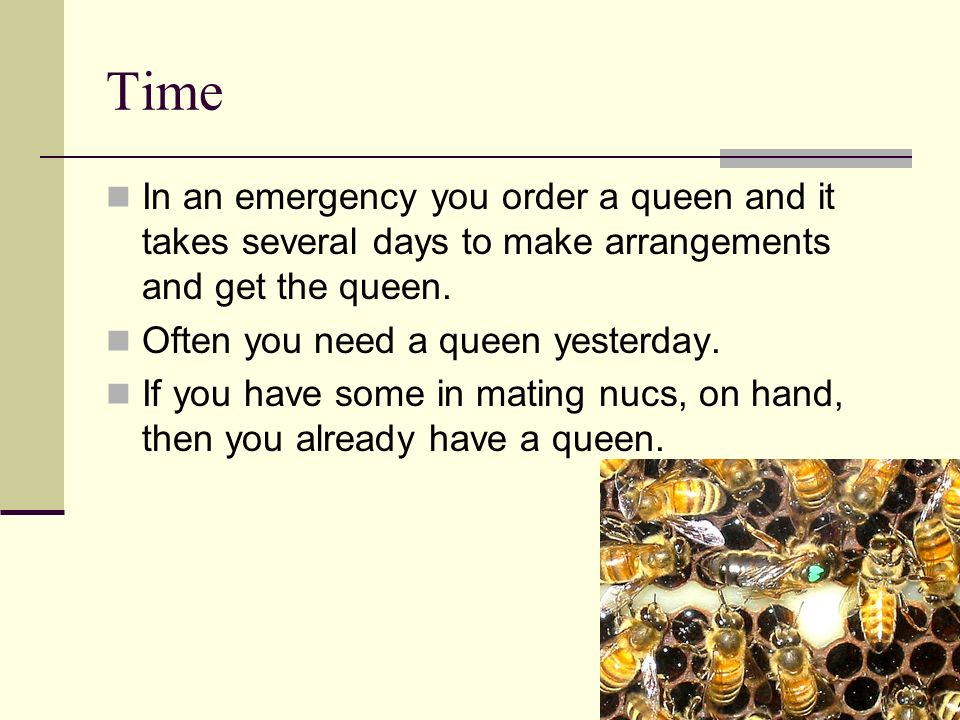TimeIn an emergency you order a queen and it takes several days to make arrangements and get the queen.