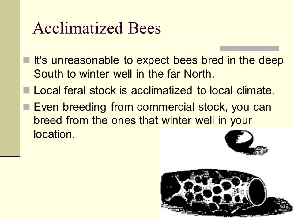 Acclimatized BeesIt s unreasonable to expect bees bred in the deep South to winter well in the far North.
