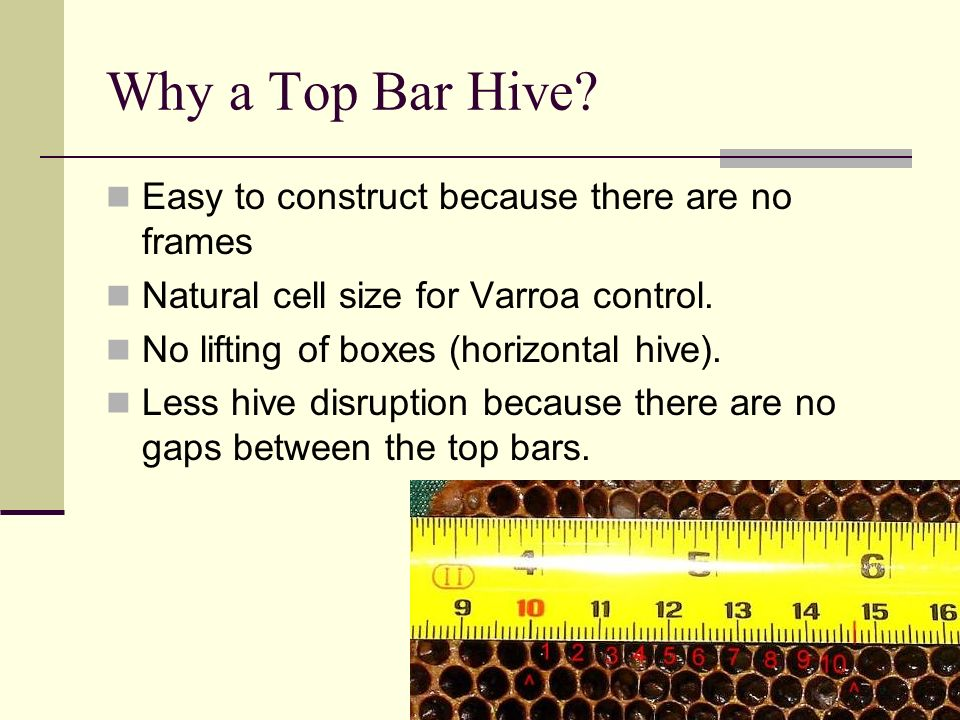 Why a Top Bar Hive Easy to construct because there are no frames