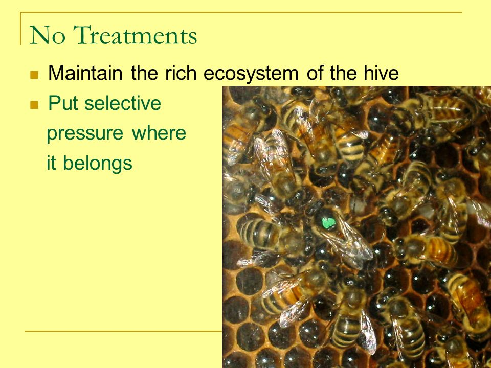 No Treatments Maintain the rich ecosystem of the hive Put selective
