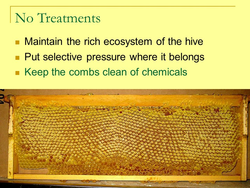 No Treatments Maintain the rich ecosystem of the hive