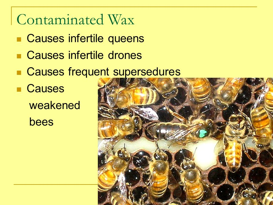 Contaminated Wax Causes infertile queens Causes infertile drones