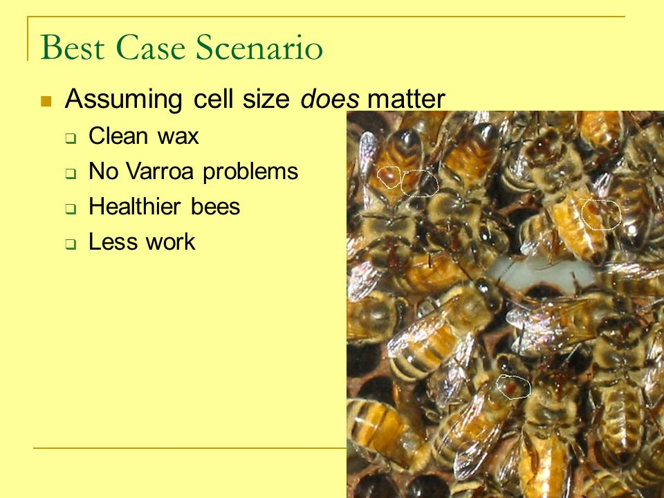 Best Case Scenario Assuming cell size does matter Clean wax
