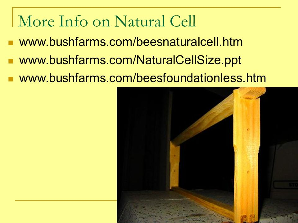 More Info on Natural Cell