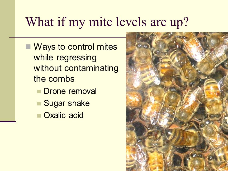 What if my mite levels are up