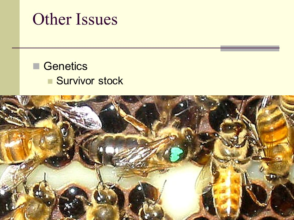 Other Issues Genetics Survivor stock