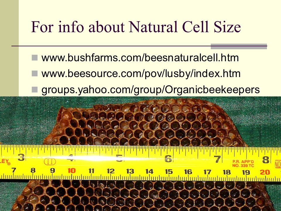 For info about Natural Cell Size