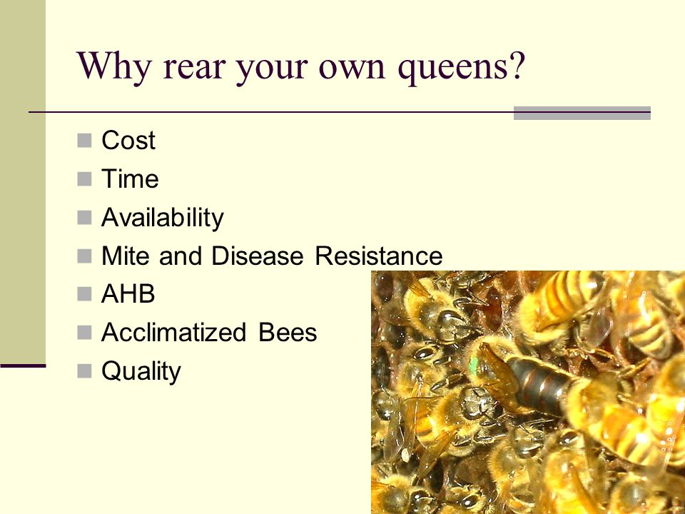 Why rear your own queens