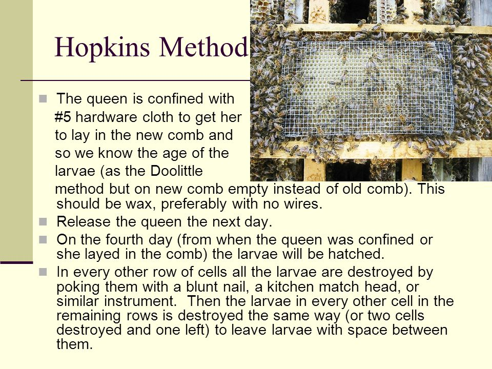 Hopkins Method The queen is confined with #5 hardware cloth to get her