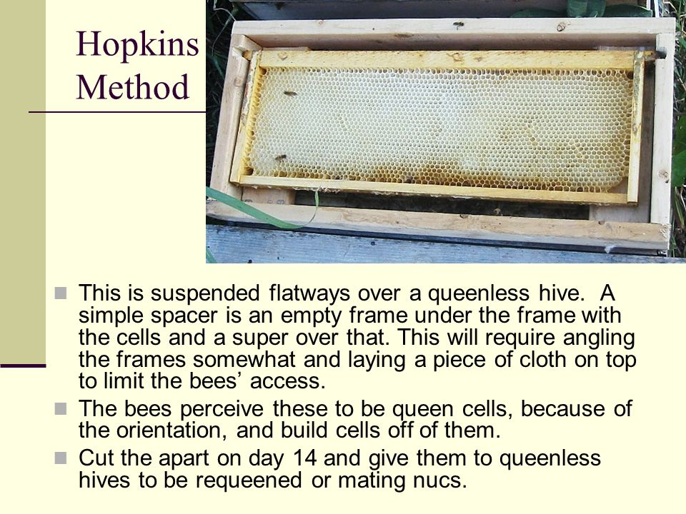 Hopkins Method