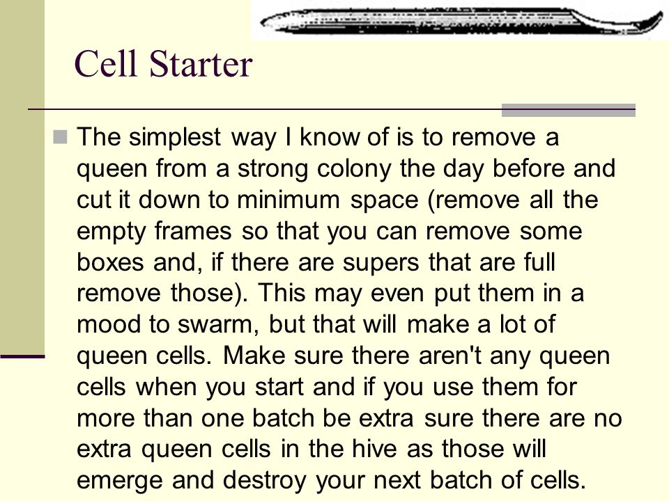 Cell Starter