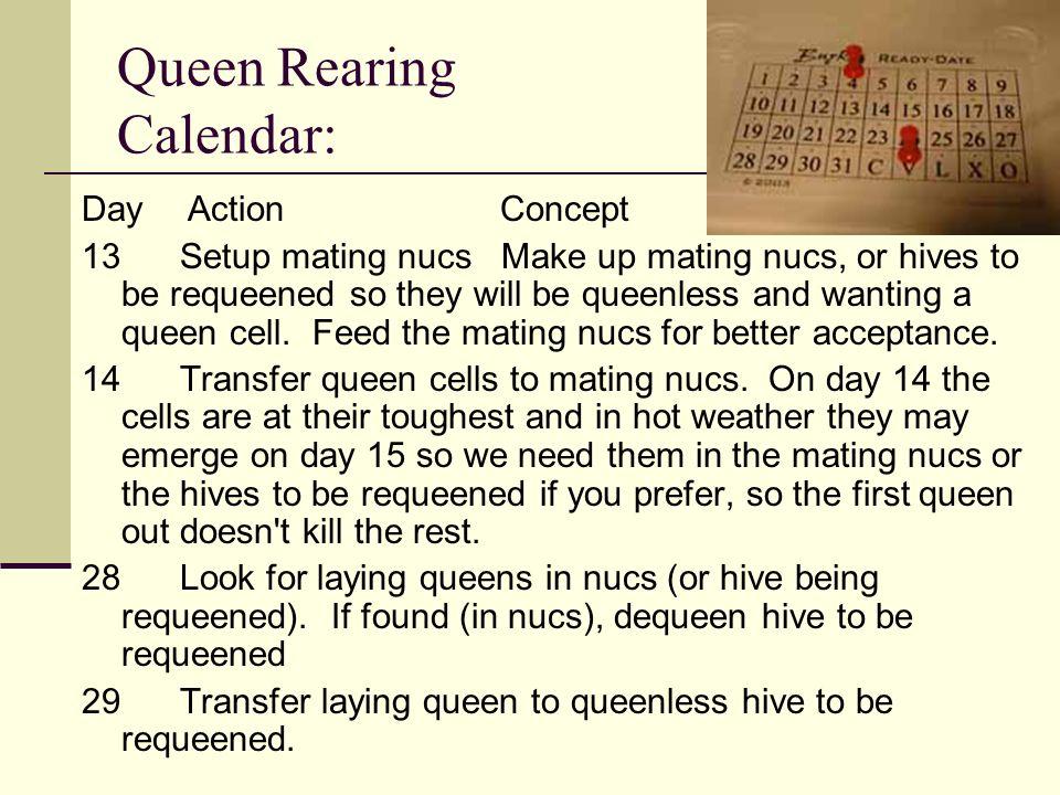 Queen Rearing Calendar: